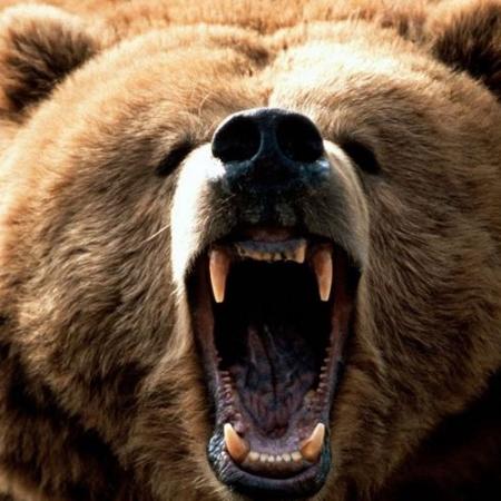 Bear Repellents