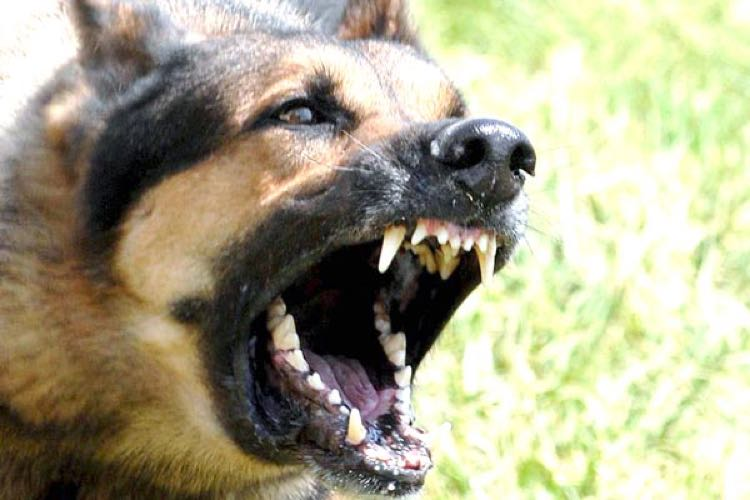 Dog attack INO Protect